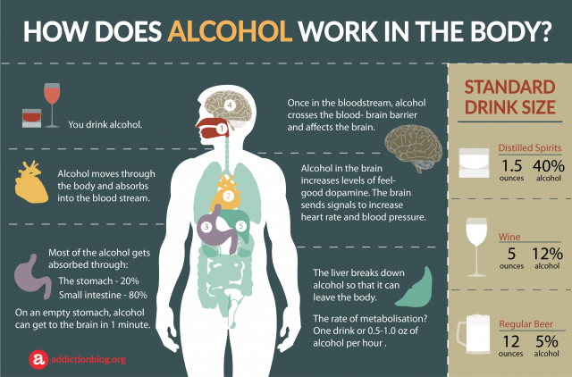 How drinking affects the body and brain | Alcohol Awareness